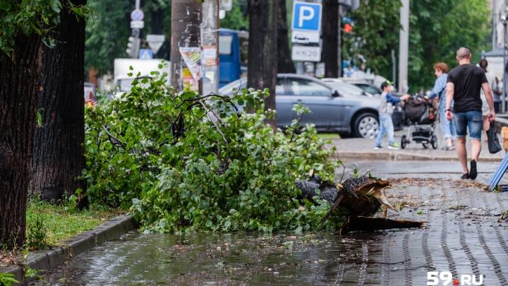 Последствия урагана в Перми обещают устранить за два дня