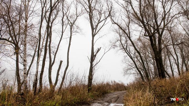 Ярославец может сесть в тюрьму на четыре года за находку в лесу