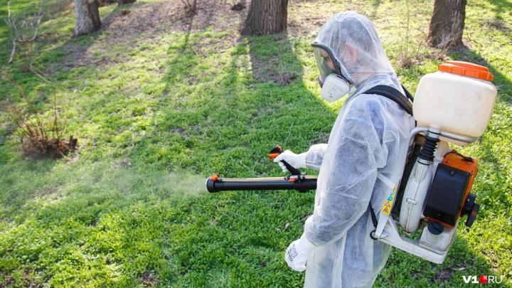 В Волгоградской области шесть человек заразились опасными инфекциями после укусов клещей