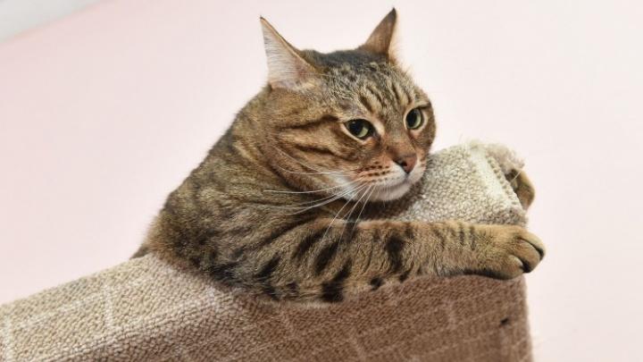Не умиляйтесь, если ваш котик стал толстым: 8 правил здоровой жизни питомца от ветеринара