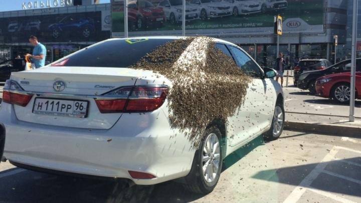 «Пришлось травить»: владелец Toyota, чей авто атаковали пчёлы в Кольцово, с трудом избавился от них