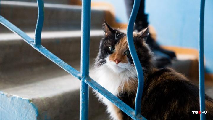 Ярославец расстрелял соседей, искавших в подъезде своего кота