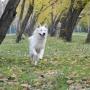 Тюменка, покусанная собакой во время фотосессии, отсудила у её владельца 150 тысяч рублей