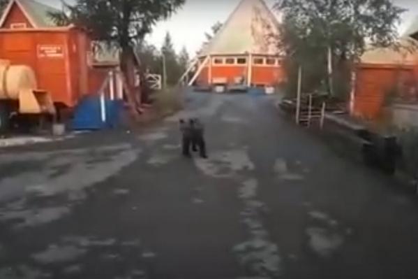 Медведь с интересом рассматривал полицейских, которые его прогоняли