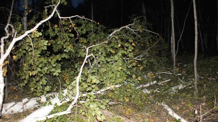Зауральского лесоруба насмерть придавило деревом