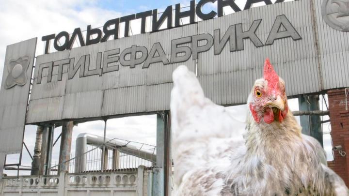 Имущество «Тольяттинской птицефабрики» выставят на торги