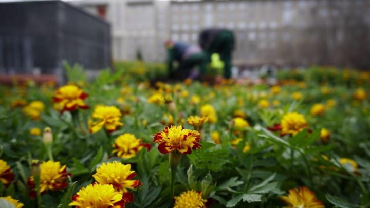 Лишь бы не замёрзли: у оперного театра посадили яркие цветы