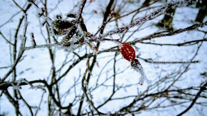 Прогноз погоды. Предупреждён — значит вооружён: нижегородцев ждут мороз и гололёд, возможны туманы
