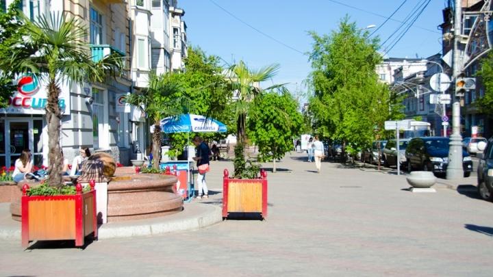 Экзотические деревья выставляют на улицы Красноярска с приходом жары