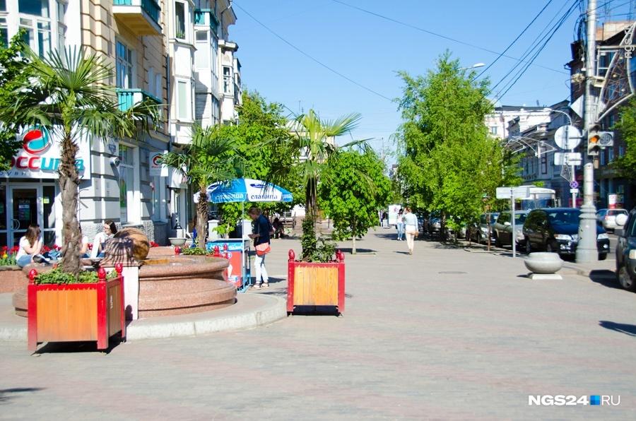Экзотические деревья выставляют наулицы Красноярска сприходом жары