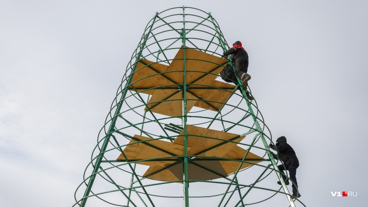 Пушистый подарок Волгограду: главную городскую елку купили на внебюджетные деньги