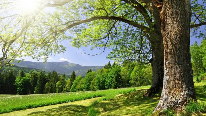 Сохрани лес – откажись от бумажного счета!