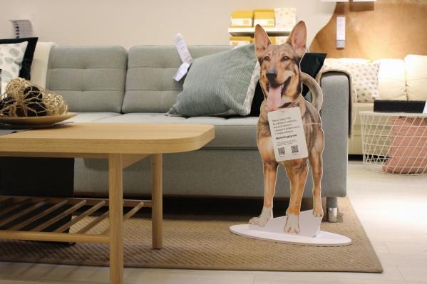 ИКЕА разместила фотографии 12 собак, которые ищут дом