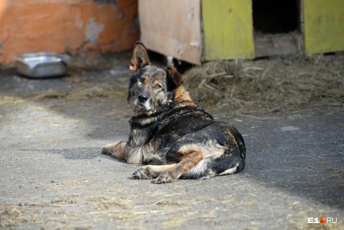 Сайт по поиску домашних животных будет показывать объявление тем, кто находится в предполагаемой зоне пропажи