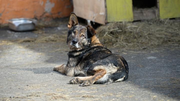 «Яндекс» поможет екатеринбуржцам искать потерявшихся животных