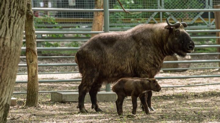 В ростовском зоопарке пополнились ряды животных из Красной книги