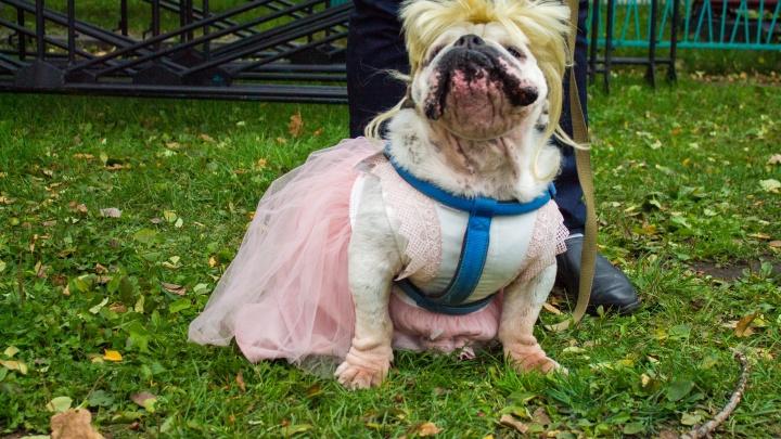 Собаки в карнавальных костюмах собрались на бал-маскарад в Центральном парке
