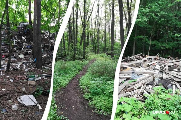 Кошкин лес превратился в свалку мусора
