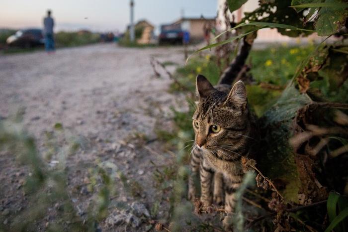Местные жители шокированы условиями, в которых им приходится жить