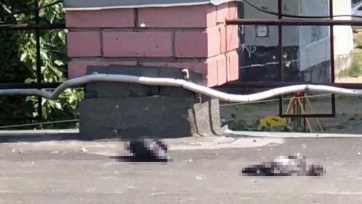В Ярославле массово гибнут голуби: зоологи рассказали, чем это опасно для людей