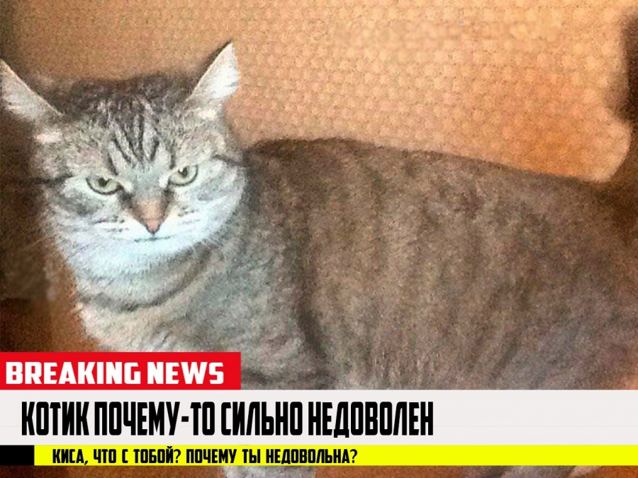 Народные избранники решили запретить лаять имяукать ночами — Молчание котят