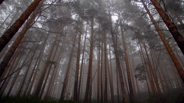 Уфимские спасатели вывели из леса заблудившуюся семью