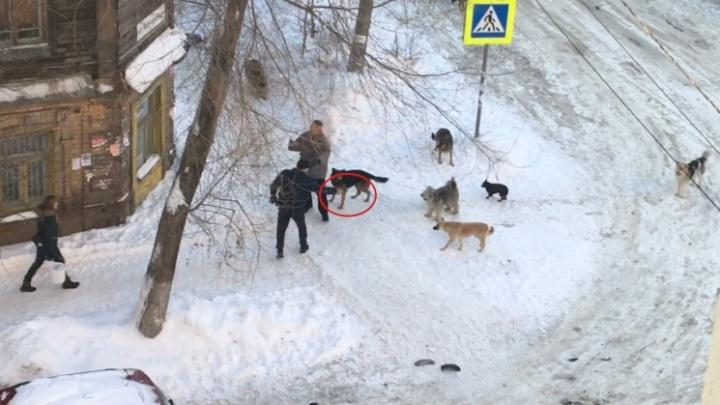 В мэрии рассказали о дальнейшей судьбе собак, из-за которых произошла стрельба на Ярмарочной