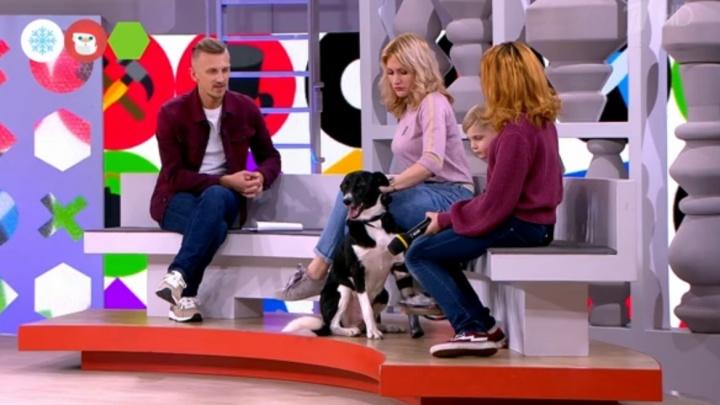На Первом канале показали трогательную историю собаки из Новоуральска с протезом вместо лапы