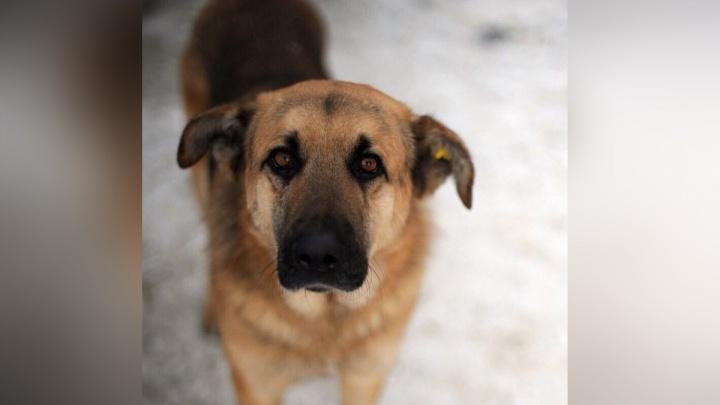 Парень бросил собаке кусок фарша с отравой при хозяйке: волонтеры собирают деньги на экспертизу яда