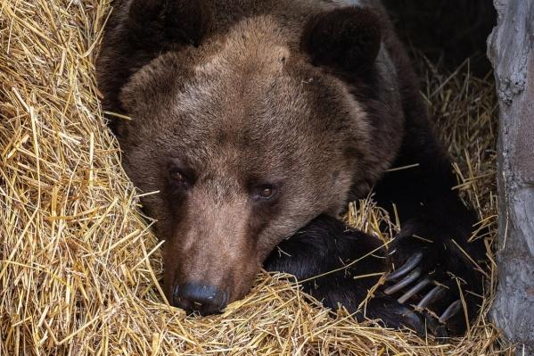 Медведь испугался и скрылся в кустах