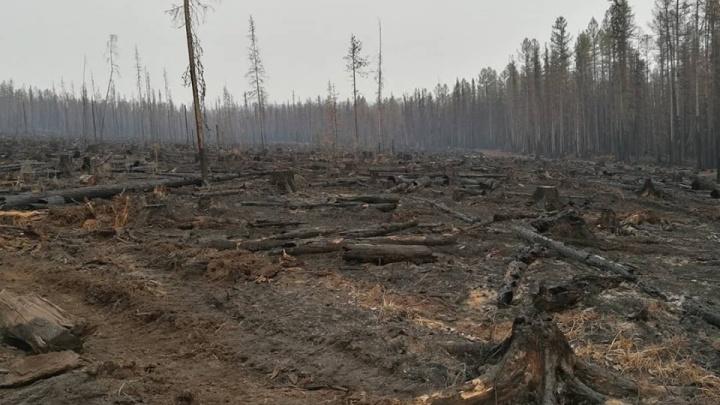 Полицейские раскрыли, как идет следствие о поджогах лесов