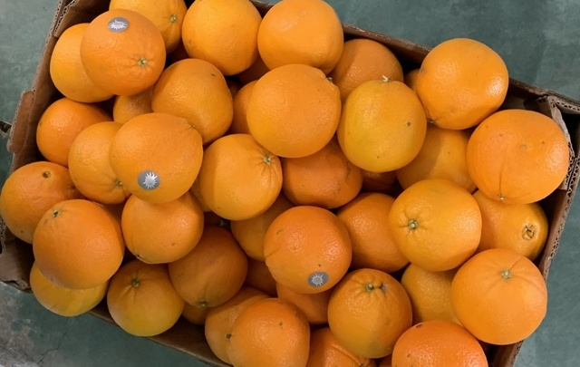 Под Ростовом тяжёлой техникой раздавили 180 килограммов санкционных фруктов