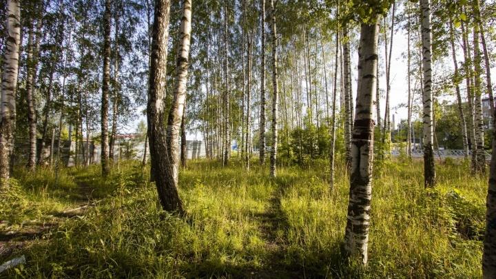 Власти Рыбинска разрешили чиновнице администрации строить дом в берёзовой роще
