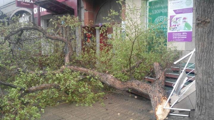 На Красном проспекте упало дерево и перегородило вход в магазин