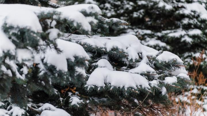 Пермякам разрешили рубить елки, но только в специальных местах