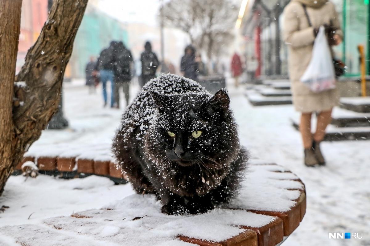 Нижегородцы просят ответственно подходить к тому, чтобы завести питомца и не выбрасывать его потом на улицу