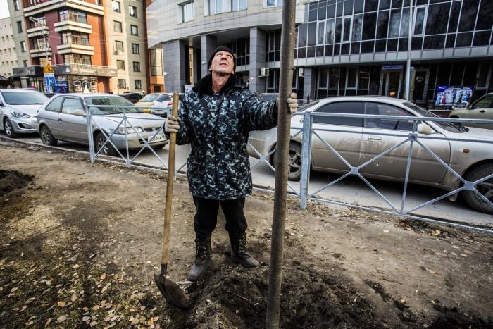 На улице Ядринцевской высадили 35 лип