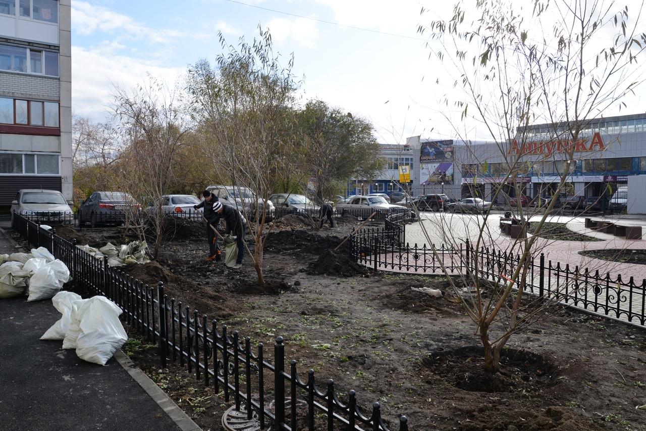 В сквере теперь растут ивы, барбарис и спирея