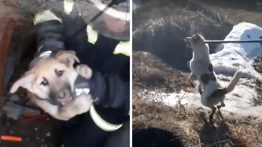 Пермские спасатели пришли на выручку двум собакам, попавшим в беду