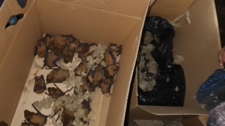 «Мы перерыли все мусорные баки»: волгоградцы спасли выброшенных на помойку летучих мышей