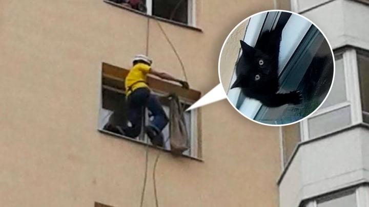 Екатеринбуржец по веревке спустился на восьмой этаж и вытащил котенка, застрявшего в окне: видео