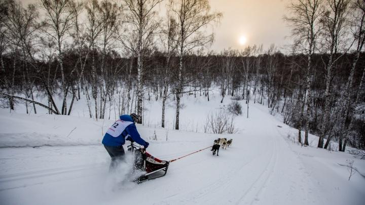 Лесную лыжню на биатлонном комплексе огородили забором по требованию ФСБ