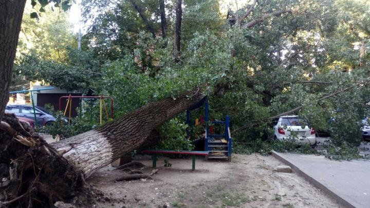 В центре Ростова огромное дерево упало на автомобили и детскую площадку