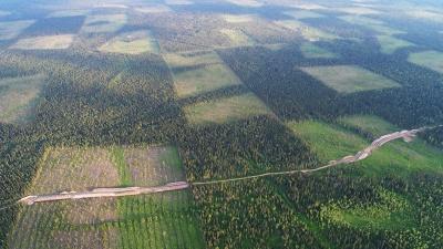 «Бескрайние леса превращаются в миф»: фотограф-натуралист — об экспедиции в дикую природу Поморья