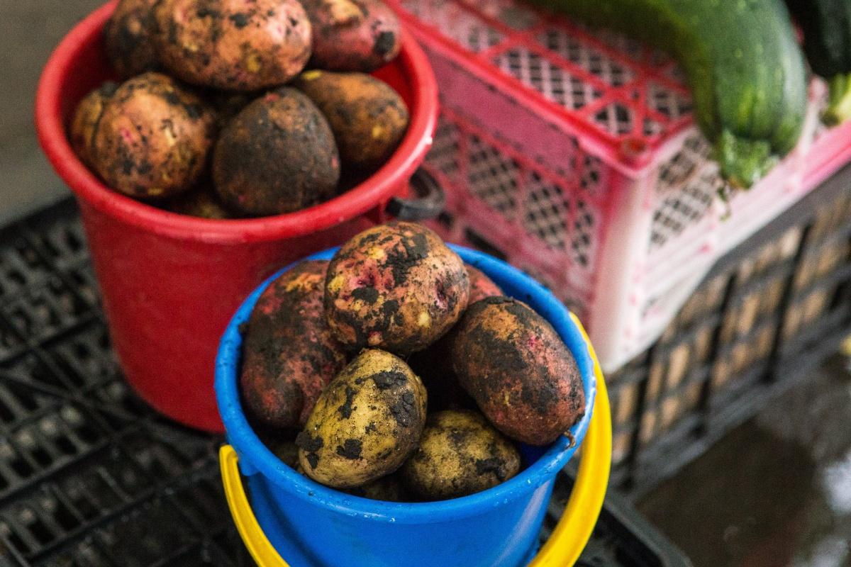Свежий картофель— от 30 до 150 рублей за килограмм, в зависимости от того, насколько он чистый