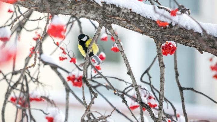 Теплые дни и морозные ночи: прогноз погоды в Красноярске на неделю