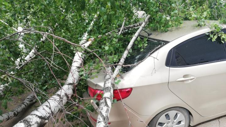 Дерево рухнуло на машину в Башкирии