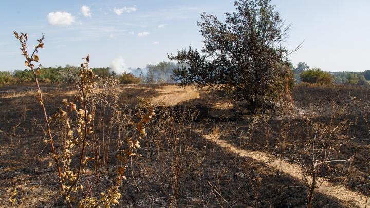 Чиновники начали отжигать: Волгоград охватит череда удушающих пожаров