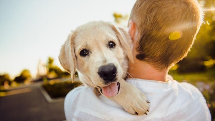 Человек собаке друг: где погулять с собакой в Самаре