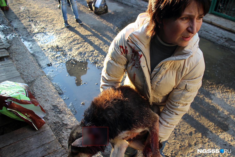На третий день работы Валерия Бегма выносит из вольера раненую собаку. Уже тогда всем стало понятно, что будет трудно